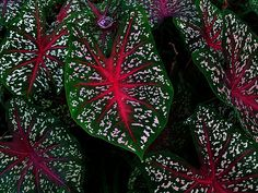 Nature Painting by Wilson Low, via Flickr
