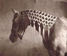 #horse #braids
