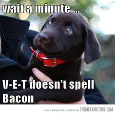 puppies, anim, funny dogs, funny pictures, funni, bacon, funny dog pictures, vet, lab