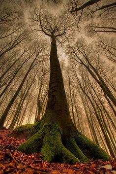 leafless creepy trees