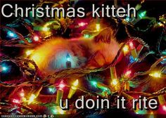 Christmas kitteh  u doin it rite