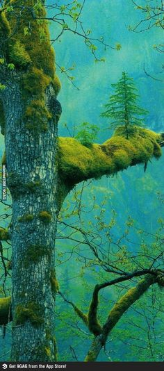 Treeception, I love this photo. It makes me think of the mini-ecosystems created on upper limbs of Giant Redwoods.