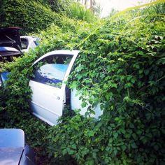 Overgrown car