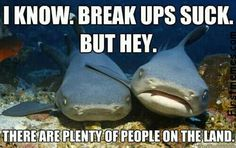 Bahahaha! Get it??? There are plenty of fish in the sea...