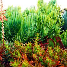 The 'kelp' (© Bret Gum)