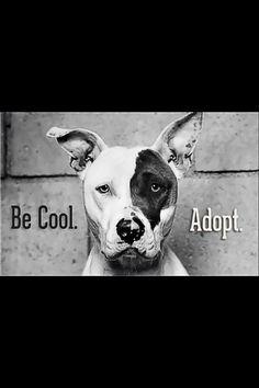 Adopt.