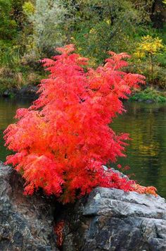 Four seasons in Northern California: Awesome Autumn Plumas County Northern California