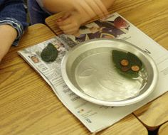 My leaf holds _____ pennies in water. Also surface area out of water, how many pennies does it take to cover a leaf? Lots of leaf learning ideas on this site.