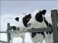 I miss these California milk commercials.
