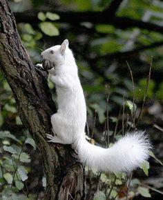 **White Squirrel by Al Behrman
