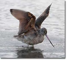 JOIN US for the GREAT BACKYARD BIRD COUNT!!!!  The 2012 GBBC takes place February 17 through February 20.