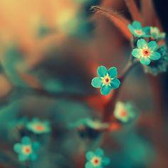 Orange + Teal orang, blue flowers, color combos, beauty, aqua, tattoo, inspiring pictures, blues, blossoms