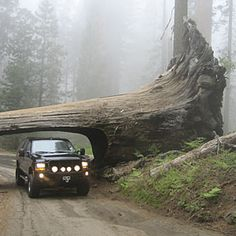 Sequoia and Kings Canyon wow spots | Sequoia: The Tunnel Log