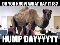 Do you know what day it is? HUMP DAYYYYYYYY Check out more at http://www.funnymemes.co #humpday #itsonlywednesday