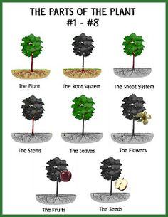 Homemade Montessori: botany