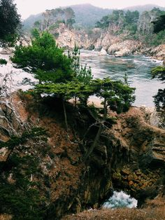 Cypress Grove - Point Lobos State Reserve, CA.   Flickr - M. Winston