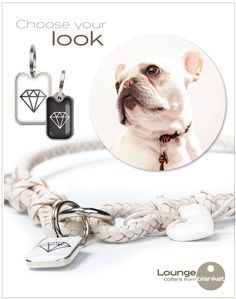 Do you need a collar that's perfect for that Special Occasion? | under the blanket