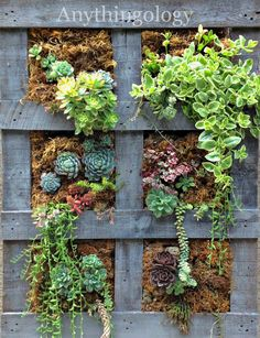 Vertical Pallet Garden by Anythingology