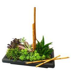 Garden of Zen succulent garden by Cactus Flower Florists, AZ – $39.99