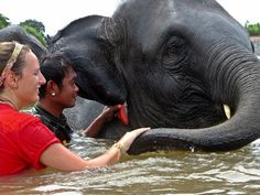 Bath time at the Elephant Care project in Thailand