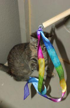 Ribbon cat toy