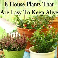 8 House Plants That Are Easy To Keep Alive