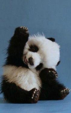 hand, bear, high five, baby pandas, pet, wave, baby animals, cub, friend