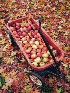 Apple picking - so many yummy things to do with your bounty afterwards!