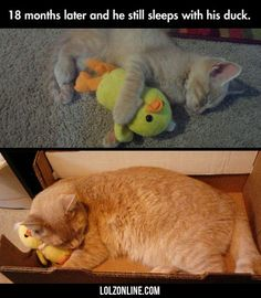 "18 Months Later And He Still Sleeps With His Duck <a class=""pintag"" href=""/explore/lol/"" title=""#lol explore Pinterest"">#lol</a> <a class=""pintag"" href=""/explore/haha/"" title=""#haha explore Pinterest"">#haha</a> <a class=""pintag"" href=""/explore/funny/"" title=""#funny explore Pinterest"">#funny</a>"