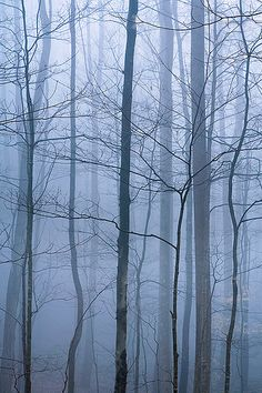 Forest Fog Great Smokies NP by David M. Cobb