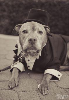 What a stud | @Gail Mounier EMP Photography. #wedding #pets