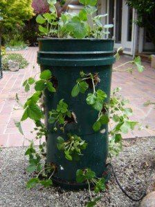 How To Build a Strawberry Tower From Two 5 Gallon Buckets http://thehomesteadsurvival.com/build-strawberry-tower-5-gallon-buckets/#.UXcstbXviSq