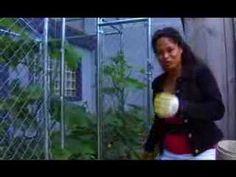Garden Girl TV: Vertical Gardening One(How to Grow Vertically)  Use old dog kennels as vertical gardens
