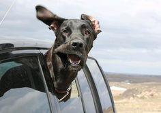 #hund #reisen #urlaub