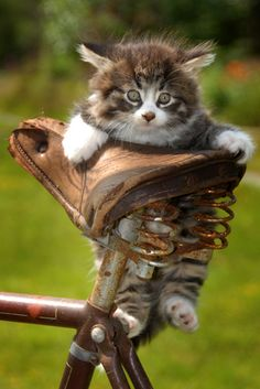 crazy cats, bicycles, bike rides, baby kittens, boost, ador, baby animals, animal babies, cat lady