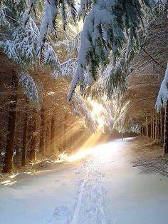 lights, winter landscape, winter time, sleigh ride, tree, winter sceneri, winter wonderland, forest, gorgeous winter