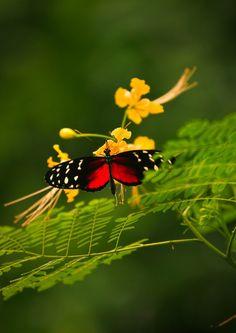 #Macro #Flower #Butterfly