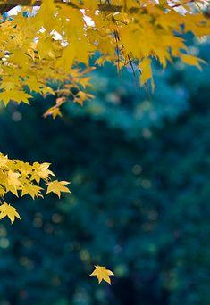 ** Yellow & blue
