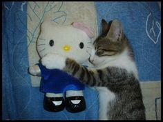 Kitty with Hello Kitty stuffed animal.