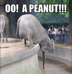 elephants, peanuts, funni stuff, anim, laugh, hilari, humor, smile, thing