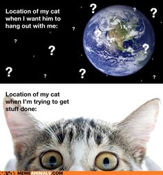 cat location...so true. never fails.