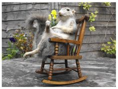 Rocky J. Squirrel, now where is Bullwinkel?