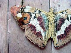 moths...