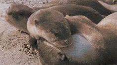 Snuggle And Cuddle