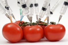 Why We Must Label Genetically Modified Food