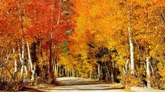Fall colors http://f