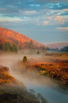 Monongahela National Forest, West Virginia..