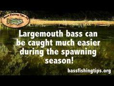 Bass Fishing Tips Episode 1
