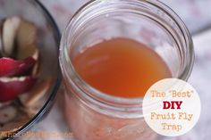 """Fruit flies are terrible! The """"Best"""" DIY Fruit Fly Trap - natural and frugal"""
