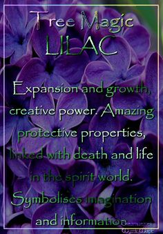 LILAC Expansion and growth, creative power. Amazing protective properties, linked with death and life in the spirit world. Symbolises imagination and information